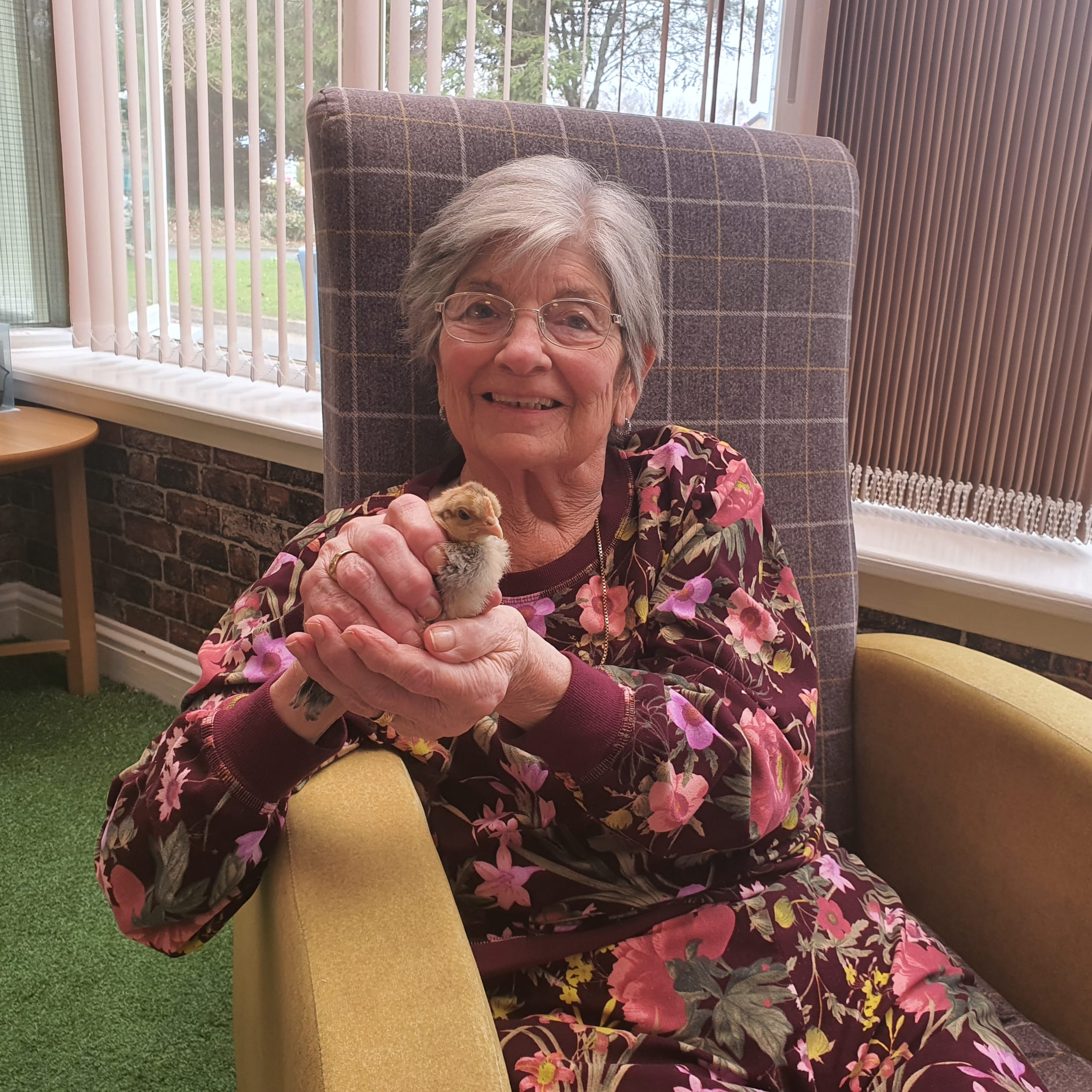 Shonda McMillan, resident of Avonbridge Care Home in Hamilton with one of the home's fluffy new chicks.